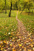 Foot path in park — Stock Photo