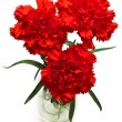 Three red carnations — 图库照片