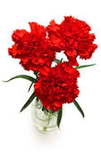Three red carnations — Stock Photo