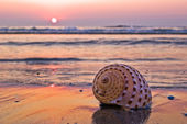 оболочки на пляже — Стоковое фото
