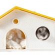 Hamster Inside His House — Stock Photo