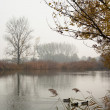 Stock Photo: Autumn Pond