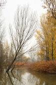 Autumn Trees on Pond — Stock Photo