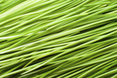 Green Blades of Grass — Stock Photo