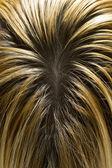 Cheveux blonds avec des racines sombres visibles — Photo