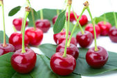 Small group cherry on a petal — Stock Photo