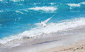 O vôo da gaivota — Foto Stock
