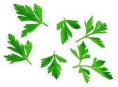Fresh herbs parsley — Stock Photo