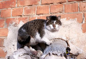 A cat basking in the district heating pipes — Stock Photo