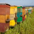 Bee hive — Stock Photo #11097012