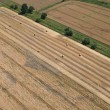 Aerial view of harvest field - Stock Photo
