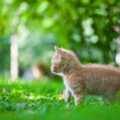 Kitten — Stock Photo #11471204