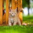 Kitten — Stock Photo #11471310