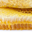 Honey comb - Stock Photo