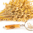 Harvest grain inspection — Stock Photo