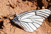 Beautiful butterfly in the sand — Stock Photo