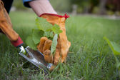 Work in garden pulling out weeds — Fotografia Stock