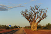Boab tree at highway outback Australia — Stock Photo