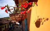 Flower in flowerpot, village Guatape, Colombia. — Stock Photo