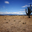 TatacoDesert in Colombia. — Stock Photo #11081228