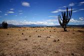 Tatacoa Desert in Colombia. — Stock Photo