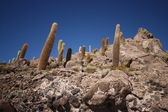 Cactus on the rock formation in salt desert, Bolivia. — Stock Photo