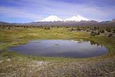 View on volcanoes in Sajama, Bolivia. — Stock Photo