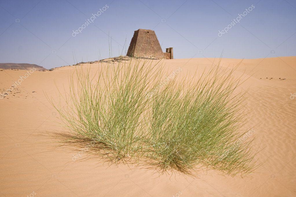 essays life desert