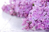 Lilacs in closeup — Stock Photo