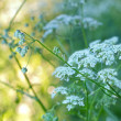 Wildblumen in Abendsonne — Stockfoto