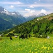 Stock Photo: Alpine mountains and flowers in Austria