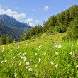 Alpine mountains in summertime — Stock Photo