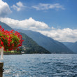 Red flowers by Lake Como — Stock Photo