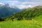 Alpine mountains and flowers in Austria — Stock Photo