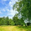 Finnish countryside landscape in the summer — Stock Photo #11968911