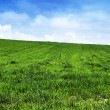 Green grass landscape — Stock Photo #11905617