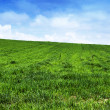 Green grass landscape — Stock Photo