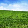 Green grass landscape — Stock Photo #11905617