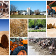 Stock Photo: Agriculture collage