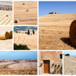 Tuscany landscape collage — Stock Photo #11989440