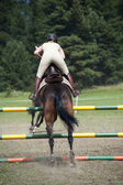 Show jumping horse and rider — Photo