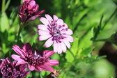 Fioletowe kwiaty — Zdjęcie stockowe
