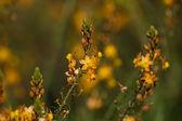 桔园 — 图库照片