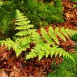 Bracken — Stock Photo #11756621