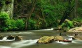 Kamenice floden — Stockfoto
