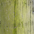 Green wood - Stock Photo