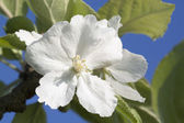 Flor natural — Stock Photo