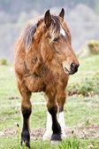 Horse on mountain — Stock Photo
