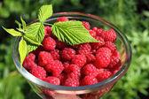 碗的新鲜树莓 — 图库照片