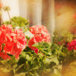 Vintage Flowers Background — Stock Photo